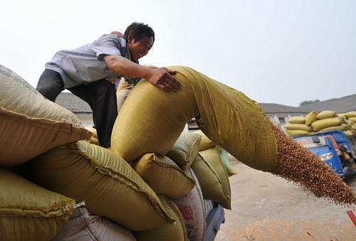 """安徽:小麦收购""""钱等粮""""(图)"""