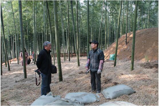 县林业局:总工程师赖广辉指导林农毛竹笋覆盖早出培育