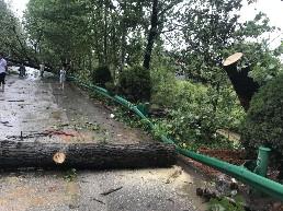 """台风""""魔蝎""""过境,县公路局积极开展道路救灾抢险工作"""