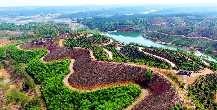 泾县:深化林长制改革    构建坚强森林生态保障