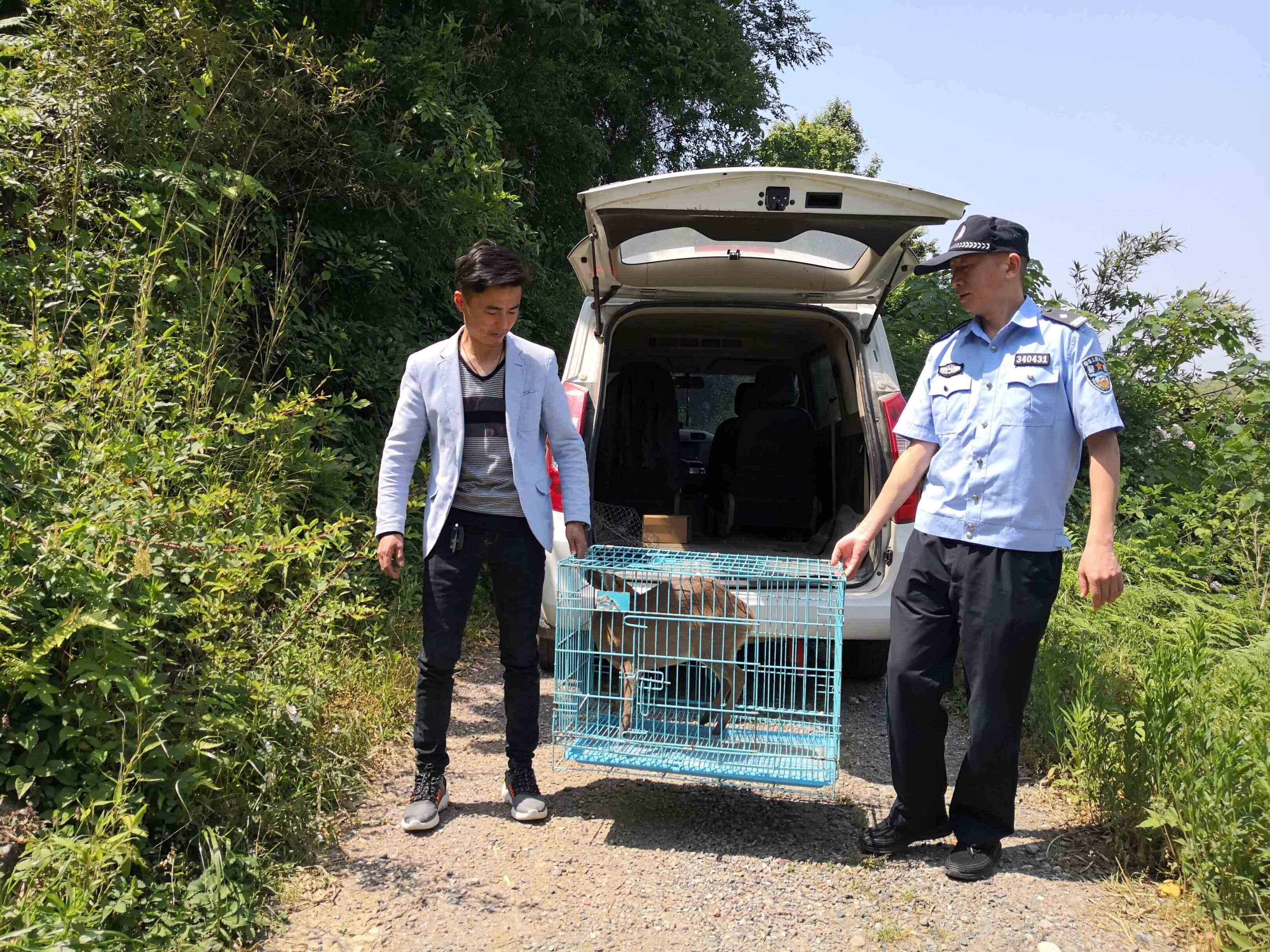 县森林公安:警民合力救助一只幼年黄麂