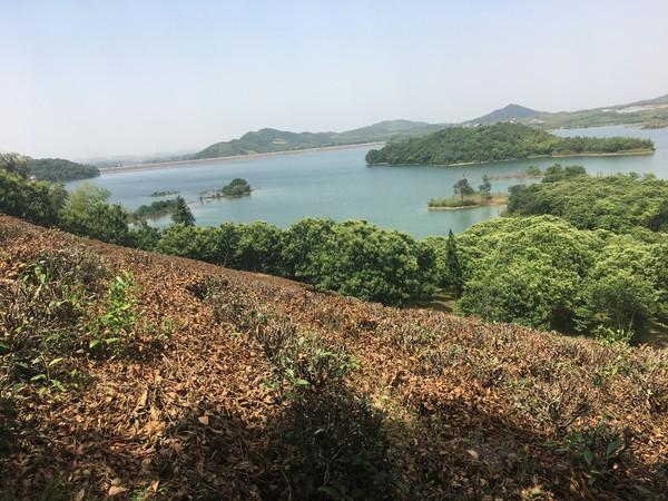 广德县持续加强卢村水源地保护示范片建设