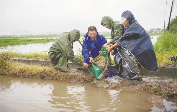广德县农科所积极应对强降雨