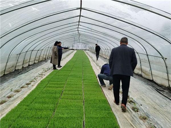 开展降温天气调查 服务农业生产